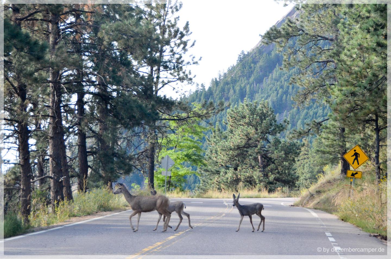 Flagstaff Mountain - tierische Gäste