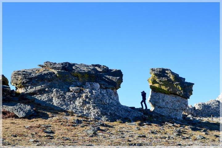 Trail Ridge Road - Rock Cut Trail