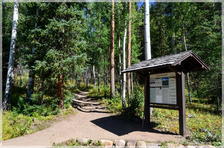 Trail Ridge Road - Elchbulle im Gebüsch