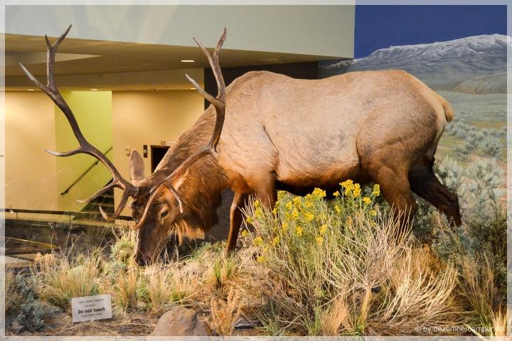 Museums-Deer