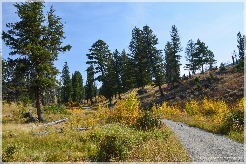 Yellowstone NP - Slough Creek Trail
