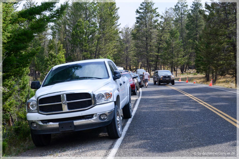 Yellowstone NP - Bärenauflauf