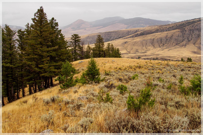 Yellowstone NP - Beaver Ponds Trail