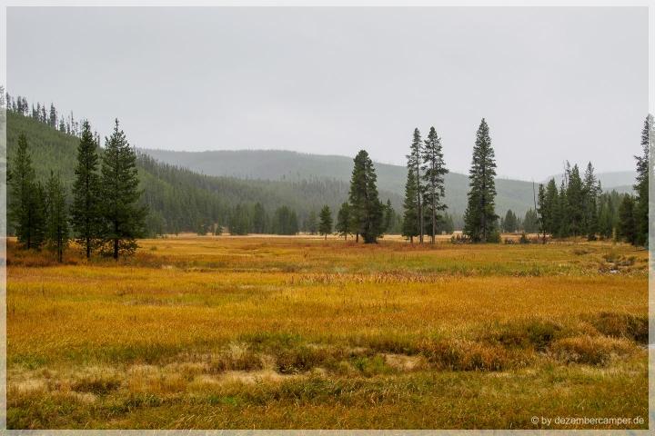 Yellowstone NP - von Mammoth nach Norris