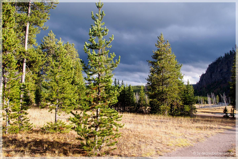 Yellowstone NP - Madison Campground