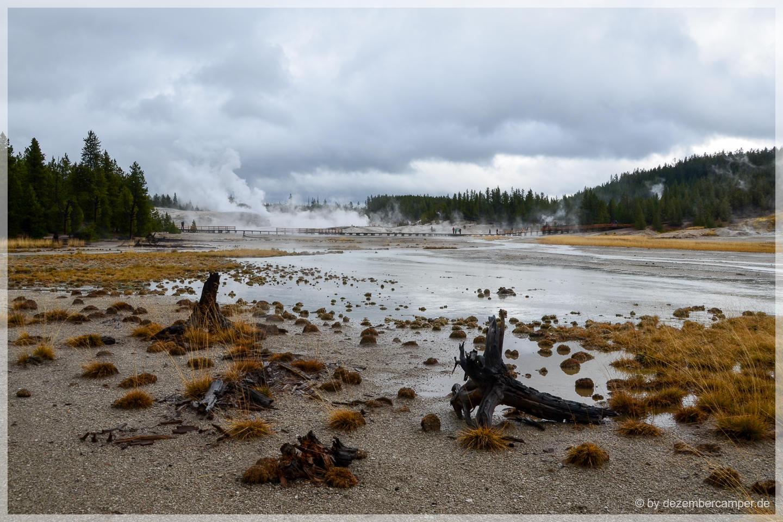 Yellowstone NP - Norris Geysir Basin