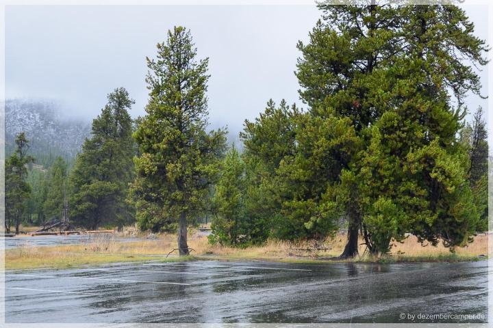 Yellowstone NP - on the rainy roads