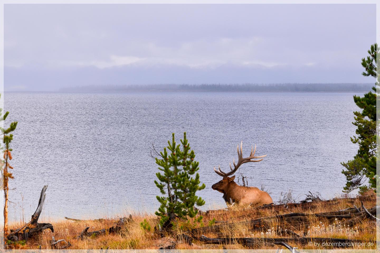 Yellowstone NP - Yellowstone Lake