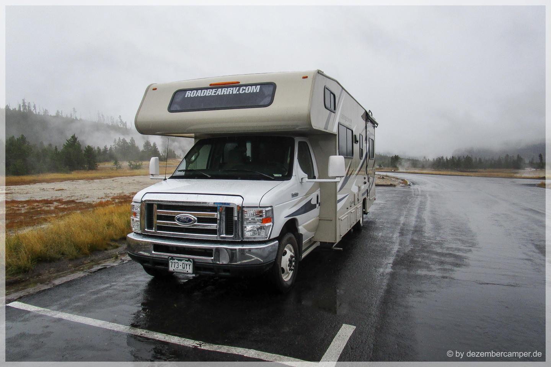 Yellowstone NP - Rainy Roadbear