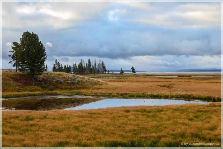 Yellowstone NP - Photo Safari
