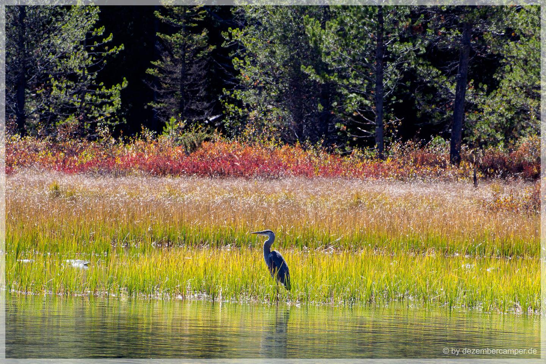 Grand Teton NP - String Lake