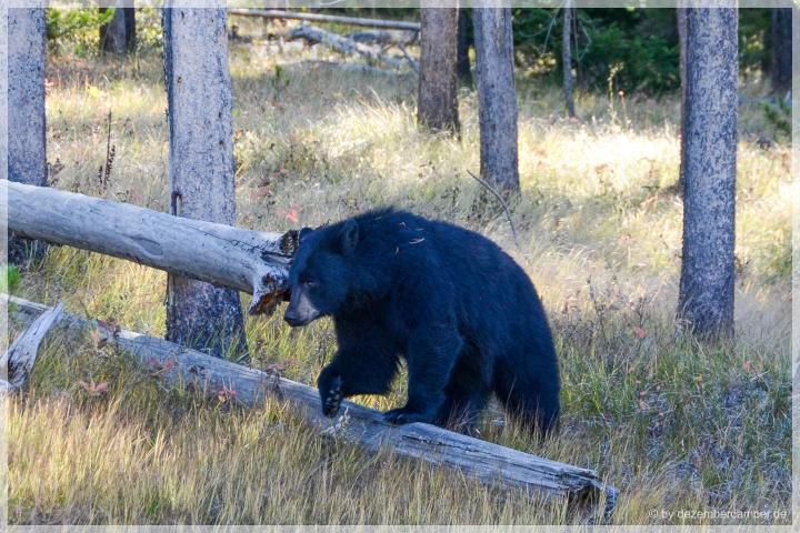Grand Teton - Wildlife